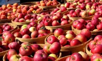 21 Жовтня у всіх куточках англії відзначатимуть «день яблука»