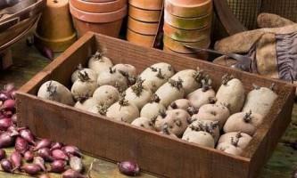 5 Способів пророщування картоплі перед посадкою