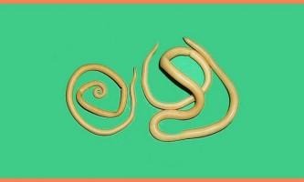 Швидке і безпечне виведення паразитів з організму