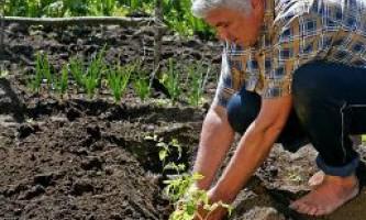 Що робити в саду і на городі в червні