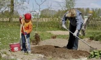 Що зробити в саду і на городі в травні