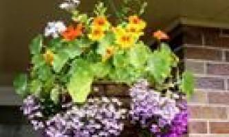 Квіти в підвісних кашпо