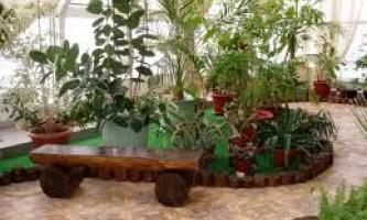 Дизайн саду і городу