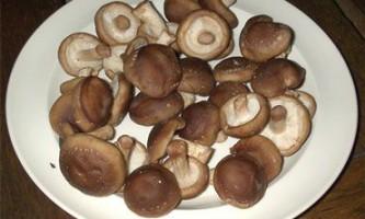 Домашнє виробництво японського гриба шиітаке