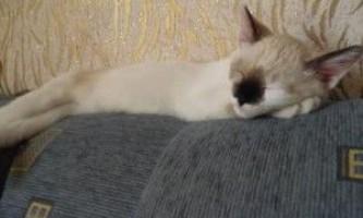 Якщо кішка дряпає меблі