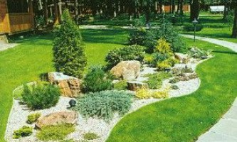 Гірський куточок у вашому саду своїми руками