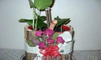 Горщик для квітів з банки від кави