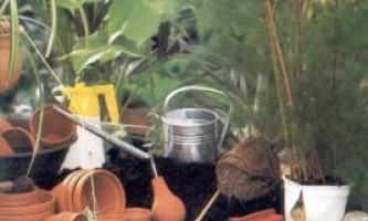 Готуємо грунт для пересадки кімнатної рослини