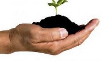 Використання альтернативних добрив для підживлення кімнатних рослин