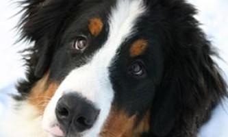 Ендокринна система собак