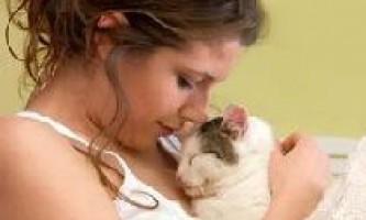 Як кішки лікують людей?