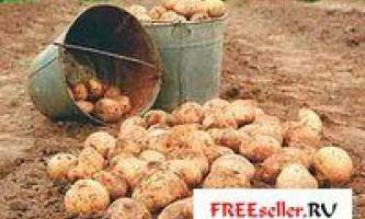 Як отримати 2 врожаю картоплі за сезон