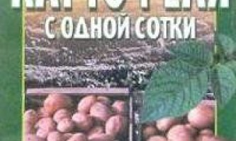 Як отримати до тонни картоплі з сотки