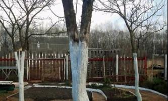 Як правильно підготувати садові дерева і чагарники до зими