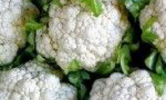 Як правильно поливати і підгодовувати кольорову капусту