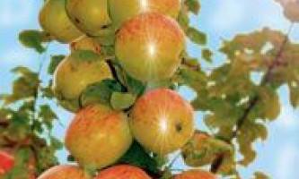 Як садити колонновідие яблуні