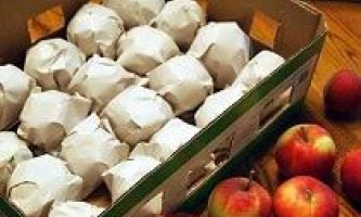 Як зберегти яблука на зиму свіжими в домашніх умовах і в погребі?