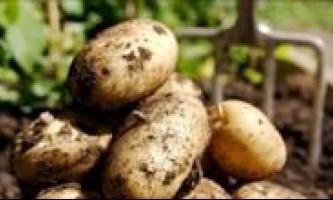 Як виростити хороший урожай картоплі