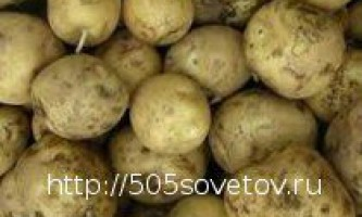 Як виростити картоплю з насіння?