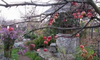Які роботи треба провести в саду і на городі в листопаді