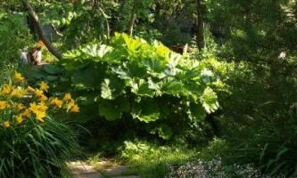 Які садові квіти ростуть в тіні дерев