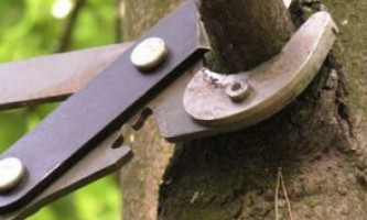 Календар обрізки плодових дерев і чагарників