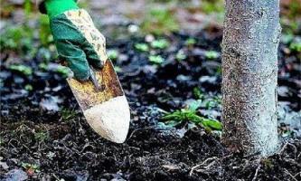 Коли і чим підживити плодові дерева і чагарники в саду