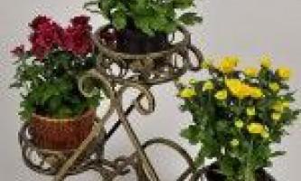 Кімнатні рослини в дизайні інтер`єру житлових кімнат
