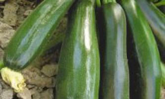 Кращі насіння кабачків, гарбузів, динь і кавунів