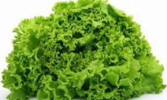 Кращі насіння салатів, кропу, петрушки і селери