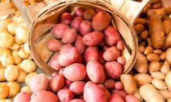 Кращі сорти картоплі для середньої смуги
