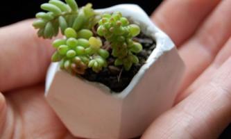 Маленькі глиняні горщики для квітів