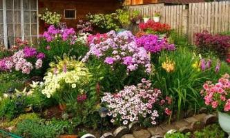 Багаторічні квіти довгого цвітіння
