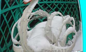 Мої лебеді з покришок