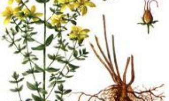 Народні засоби для лікування себореї