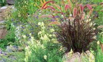 Листопад. Календар садівника