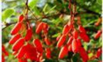 Новинки рослин для саду та городу