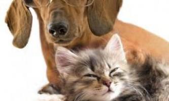 Надання першої медичної допомоги домашнім тваринам