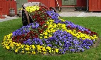 Оригінальні ідеї, як можна оформити сад своїми руками