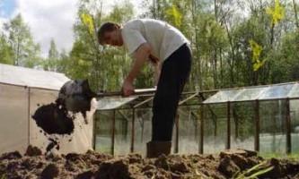 Осіння підготовка грунту під картоплю за допомогою плоскореза