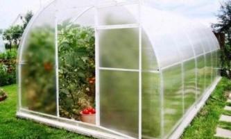 Від чого залежить урожай томатів і огірків в теплиці