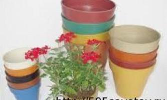 Пересадка кімнатних квітів