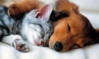Пес чи кіт? Кого вибрати в якості домашнього вихованця?