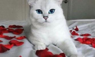 Чому в темряві у кішки світяться очі