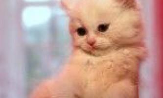 Піддаються чи кішки дресируванню?