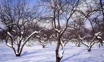 Підготовка до зими плодових дерев і чагарників