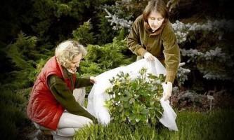 Підготовка саду до зими
