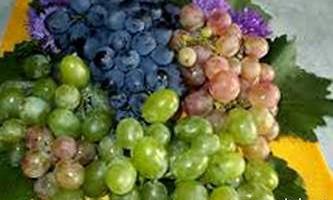 Корисні властивості винограду для лікування
