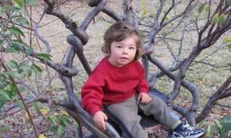 Pooktre - мистецтво управляти формою зростаючих дерев