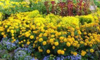 Роботи в квітниках восени